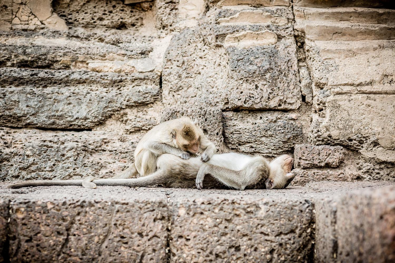 Two monkeys at Prang Sam Yot having a good time...