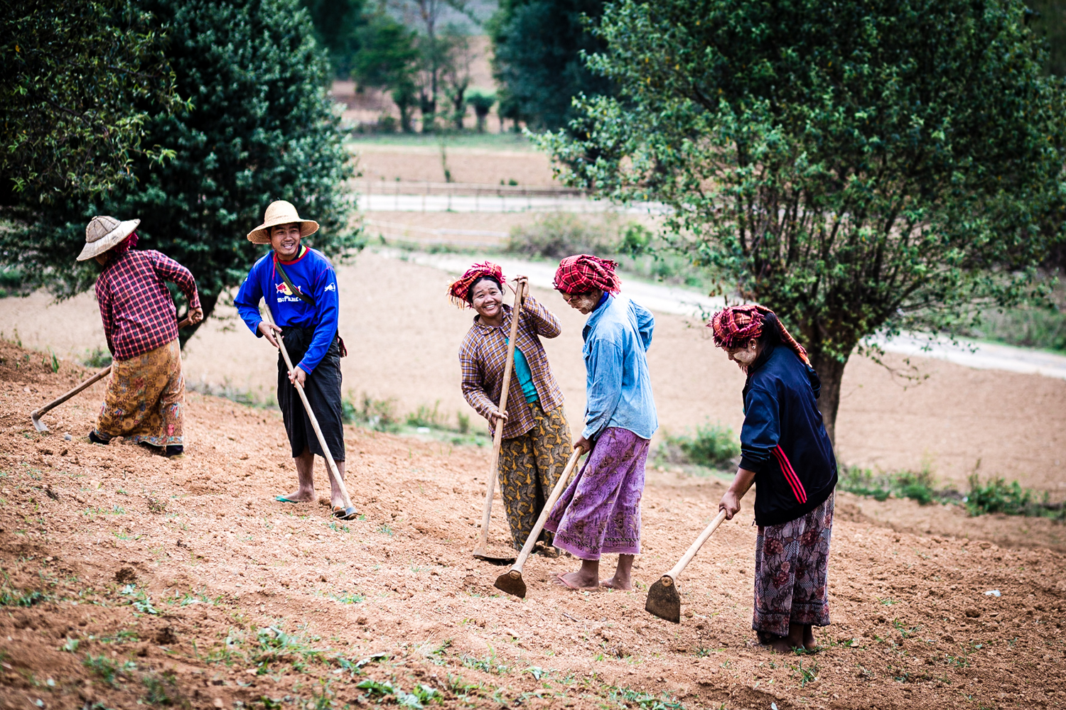 It appeared as if the women did most of the agricultural labor. They seemed to be having a good time though, chatting to one another as they worked.