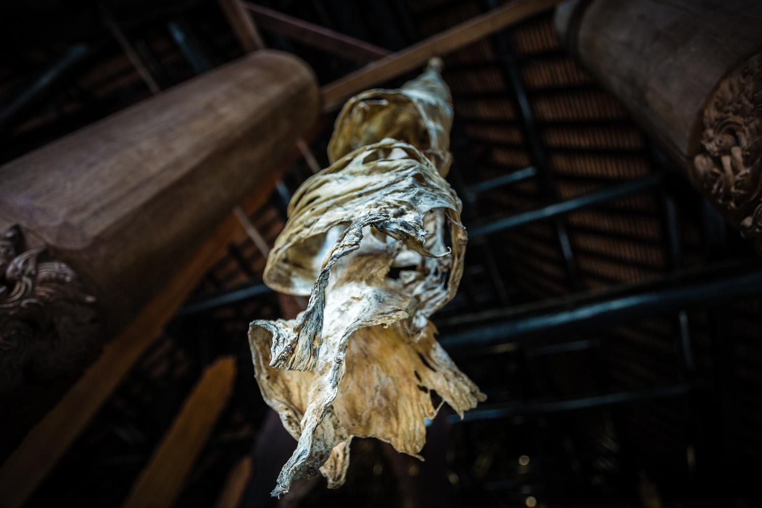 A twisted animal skin hanging from the ceiling.