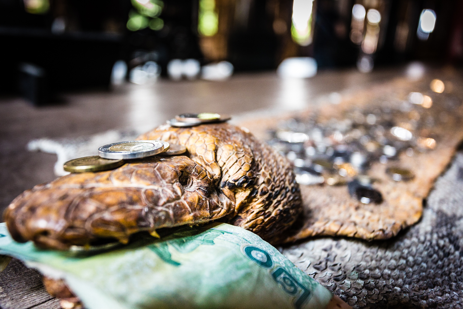"""A 15-foot snakeskin with """"good luck"""" money left by guests."""