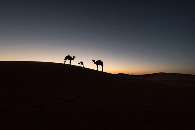 Photographer: Iñigo Echenique @allthesehumans . Rajasthan, India #travel #allthesehumans #desert #camel #india #rajasthan