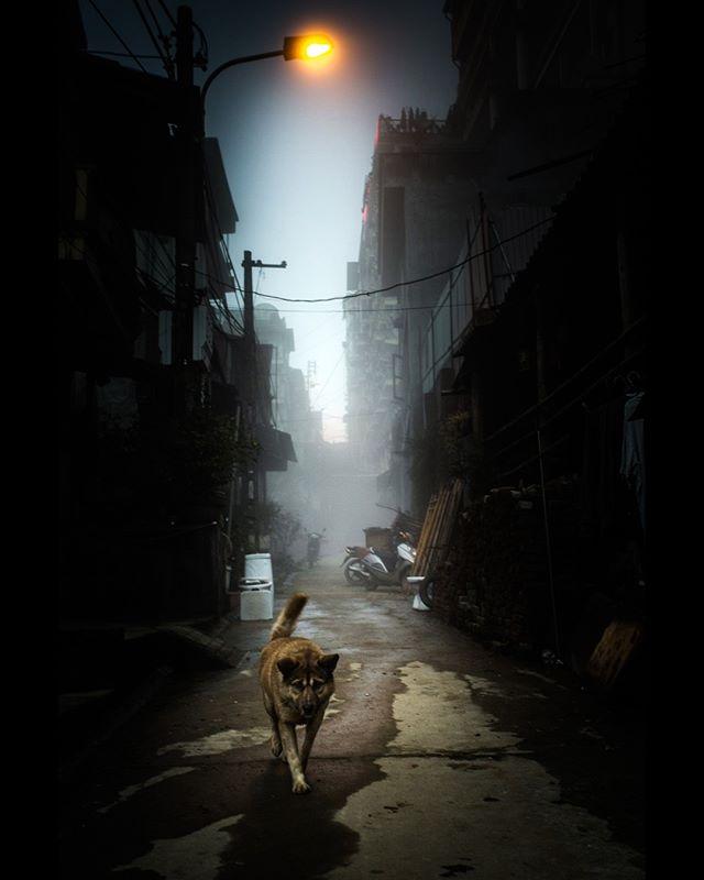 A good boy in Sapa, Vietnam. 📷by @netanelphotography  #aow #dog #travel #vietnam #sapa #night #city