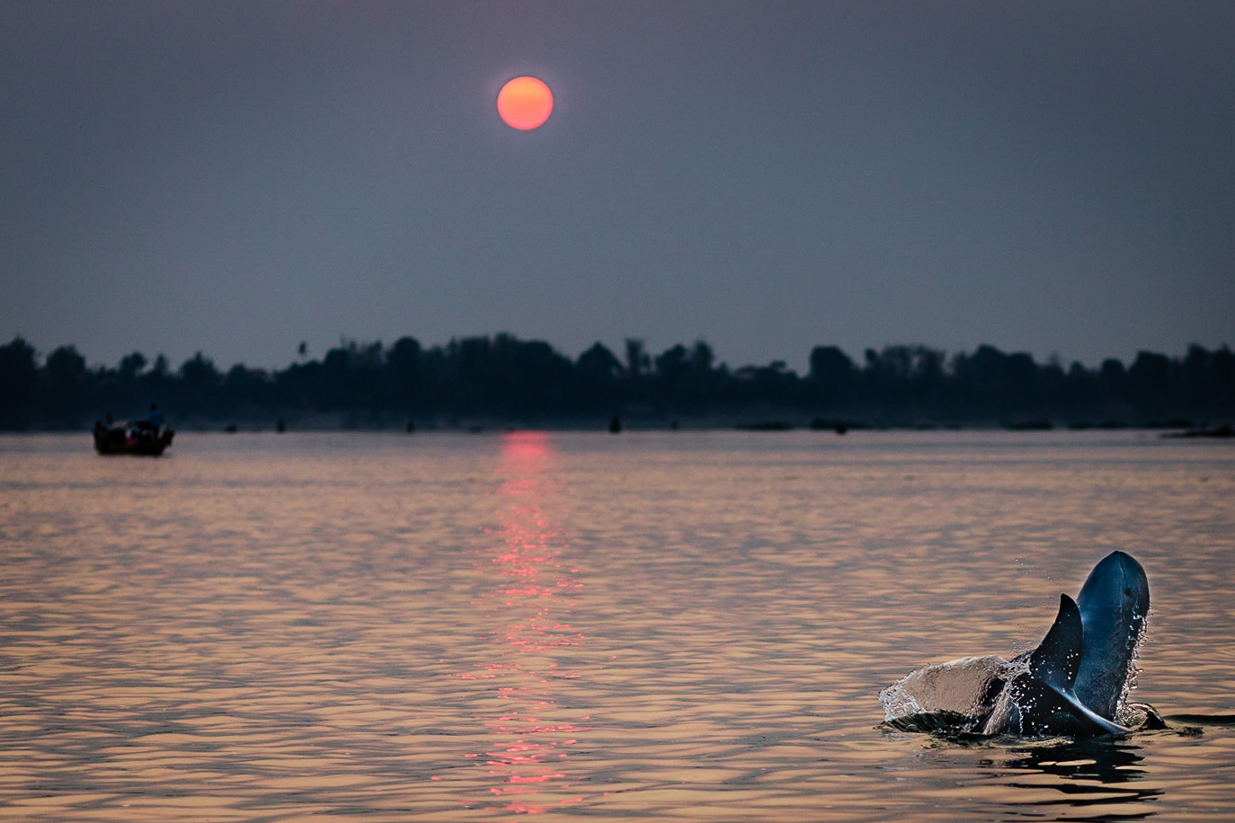 Irrawaddy River Dolphins--Kampi, Cambodia, March, 2017.