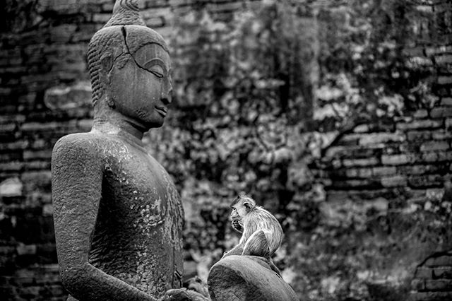 """Lopburi's Prang Sam Yot (aka """"monkey temple"""") is home to a troop of macaque.  #aow #macaque #thailand #travel #monkey #buddhism #temple"""