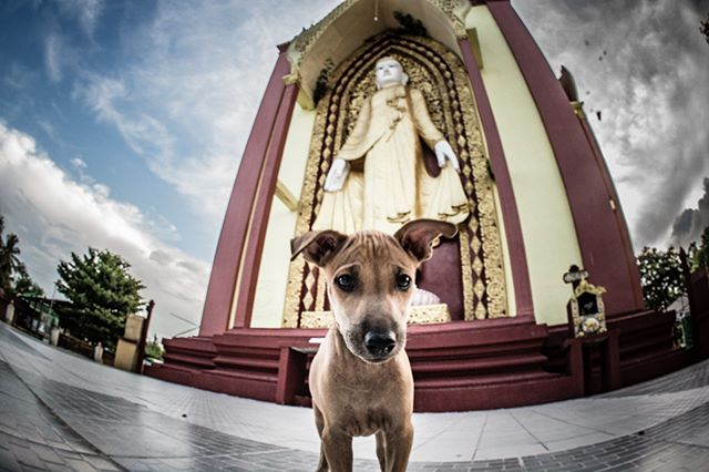 Bago, Myanmar. #dog #buddha #buddhism #myanmar #bago #pup #puppy #travel #pet #animal