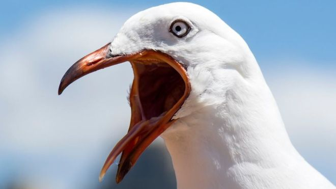 seagull1.png