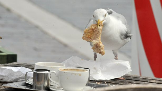 seagull2.png