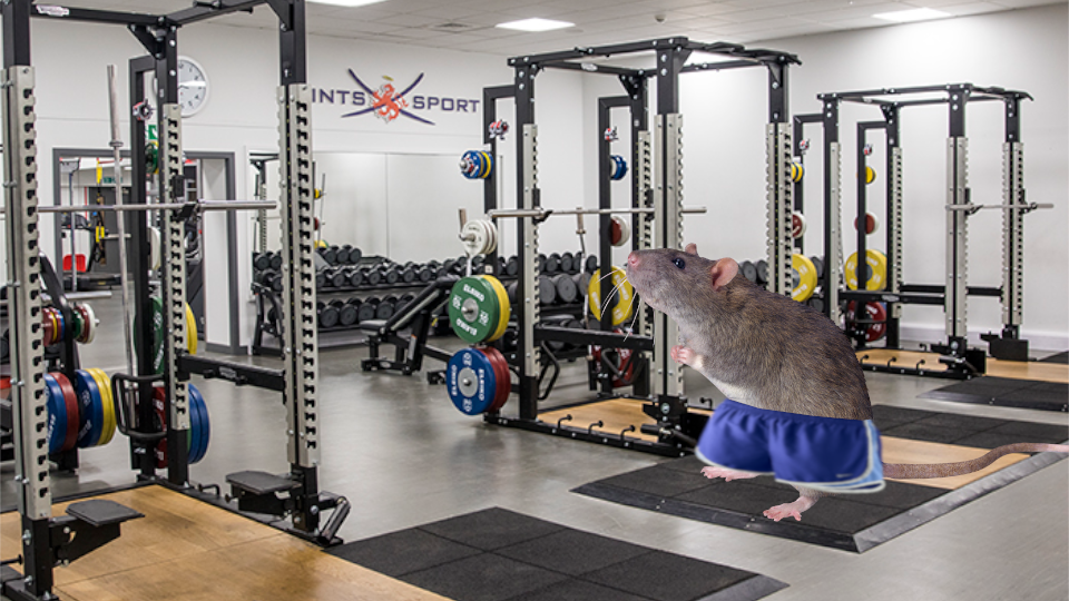 gym-rat.png