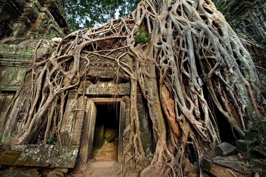 Roots always finding a way