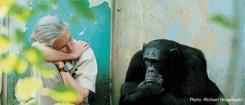 Jane-Goodall-7-md.jpg