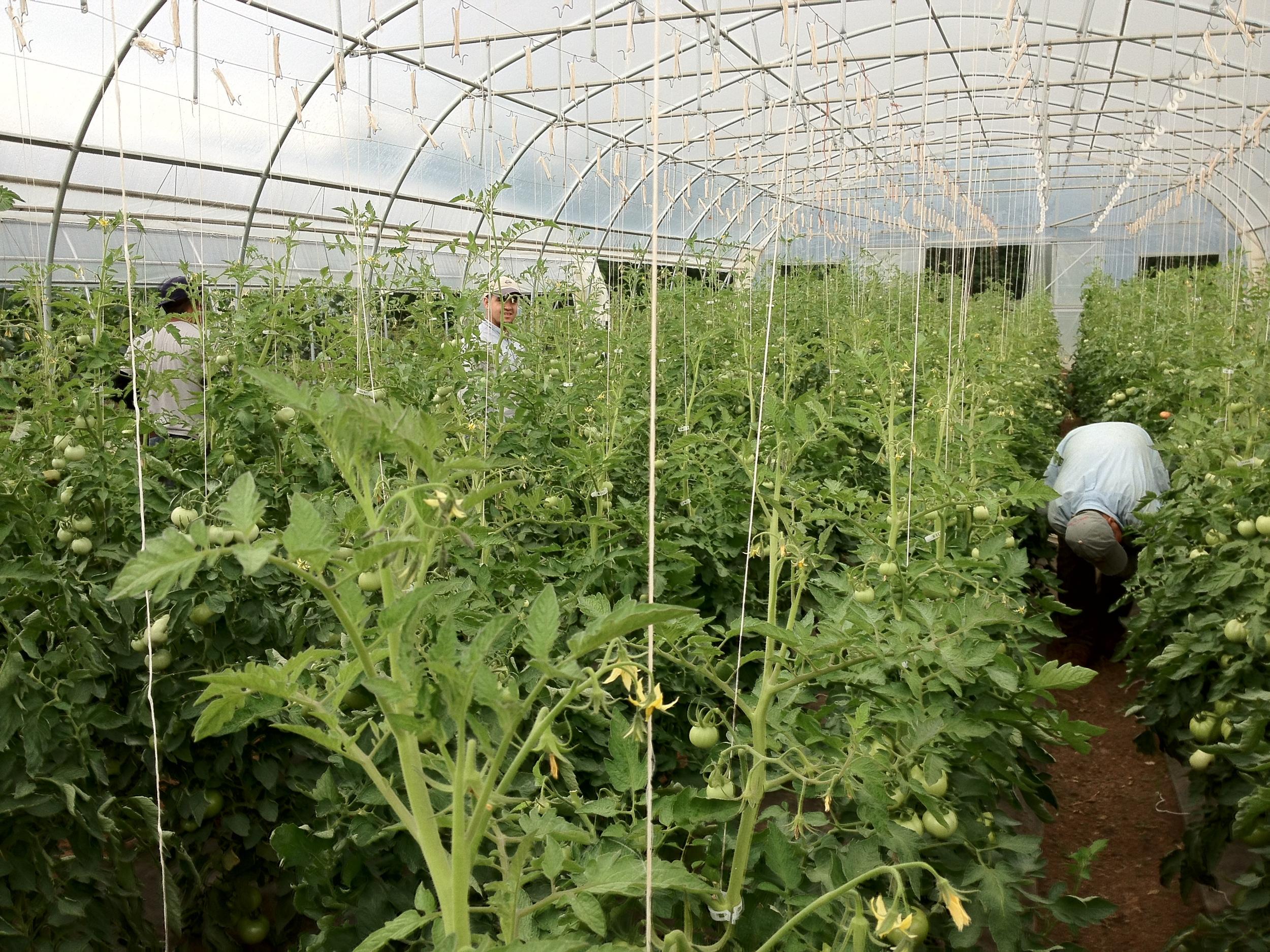 Crew Harvesting June 2012