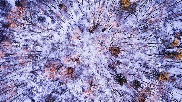 //018  #Drone #djiphantompro #dji #photography #aerialphotography #photos #trees #snow #forest