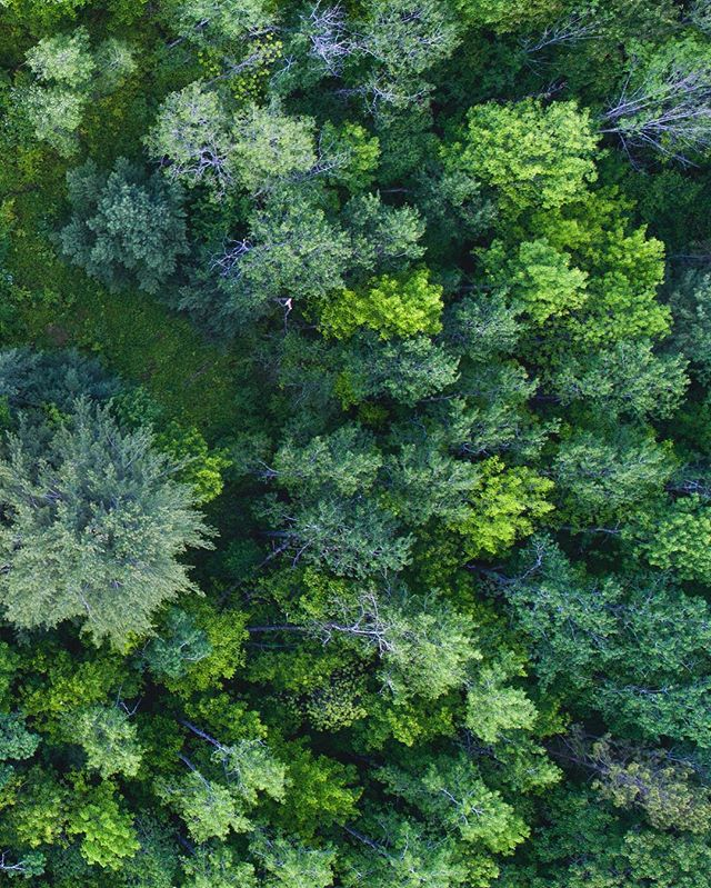 //016  #drone #photography #phantom4pro #camping #park #leonardharrisonstatepark #PA #feild #farmlife #canyon #trees