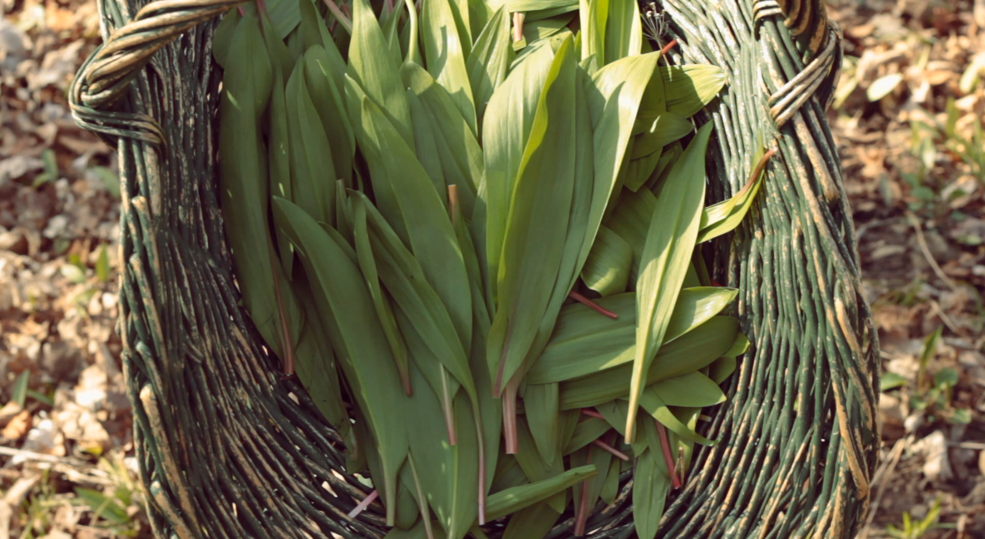 VIDEO: WILD LEEKS