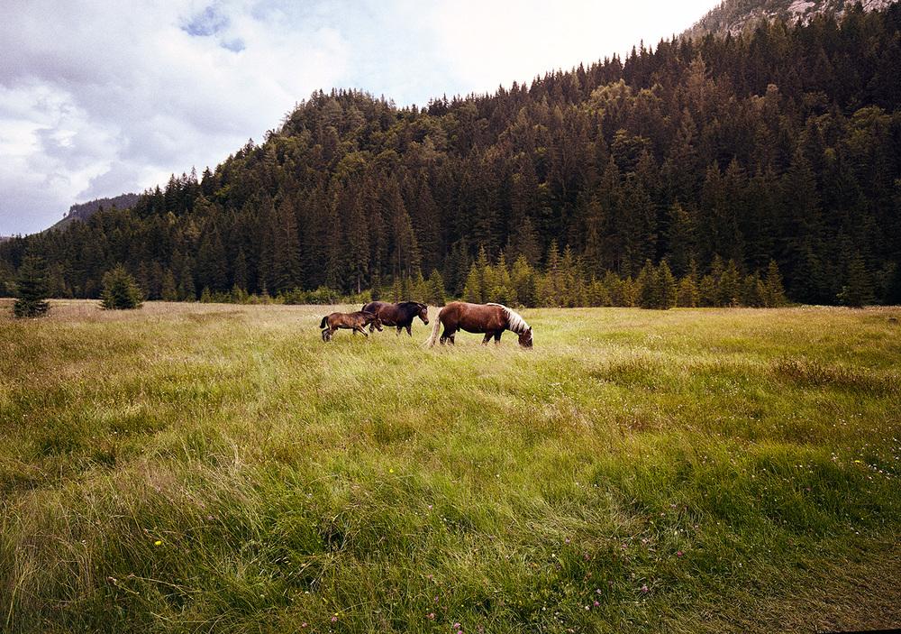 Pferde_MG_4237_1500PX_SRGB2.jpg