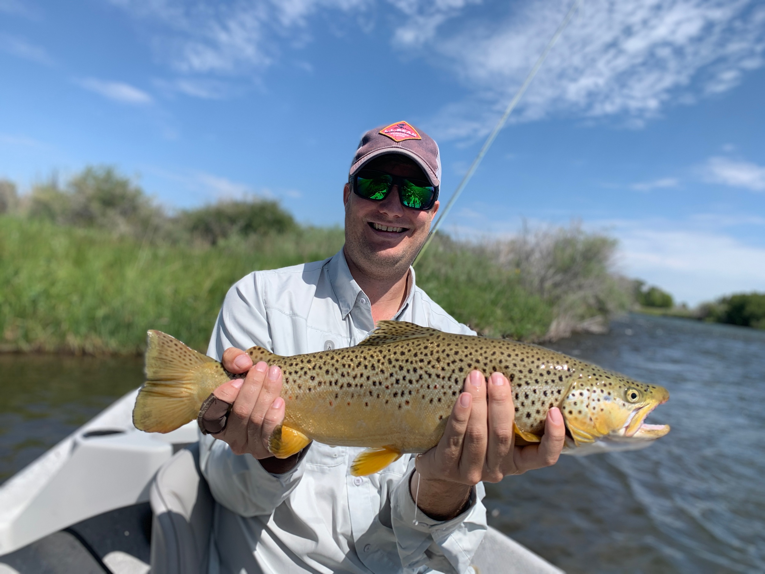 Big Dry fly eating Brown Trout!
