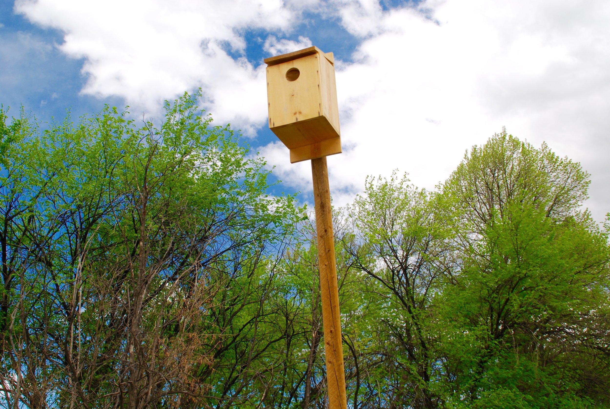 Kestrel box.jpg