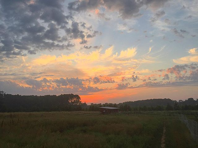 Thankful for a break in the heatwave! Super thankful for the rain that followed this sunrise!  #sunrise #pastureraised #chicken #chickencoop #eggs #organic #regenerativeagriculture #farm #fatradishfarm #frf