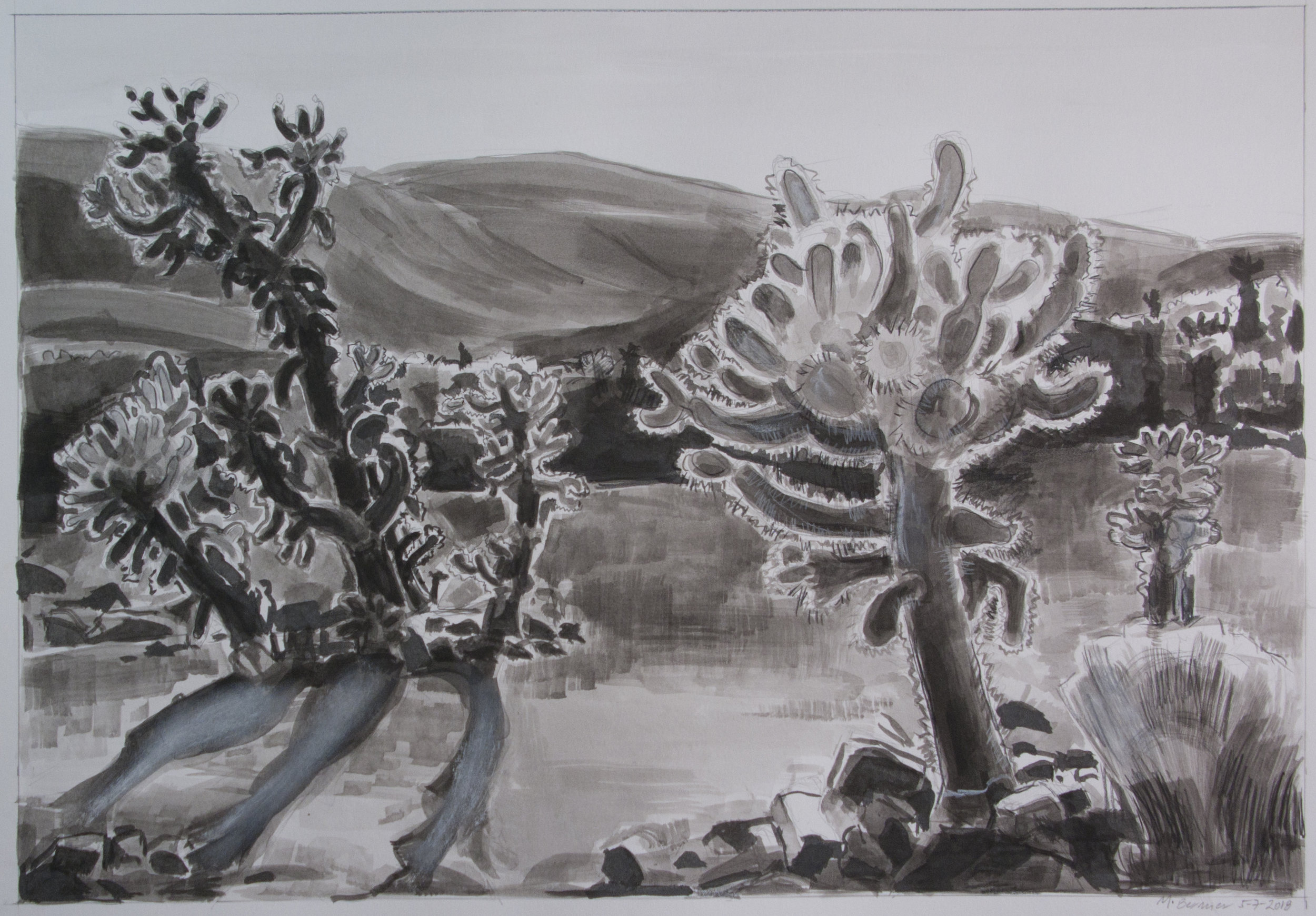 Cholla Garden ( Joshua Tree National Park) ,  ink and white conte, 18 x 24 in., 2018