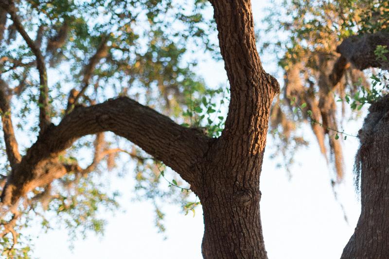 Charleston-Wedding-Inspiration-Live-View-Studios-+-Rebecca-Rose-Events-Oak-Trees-with-Moss1.jpg