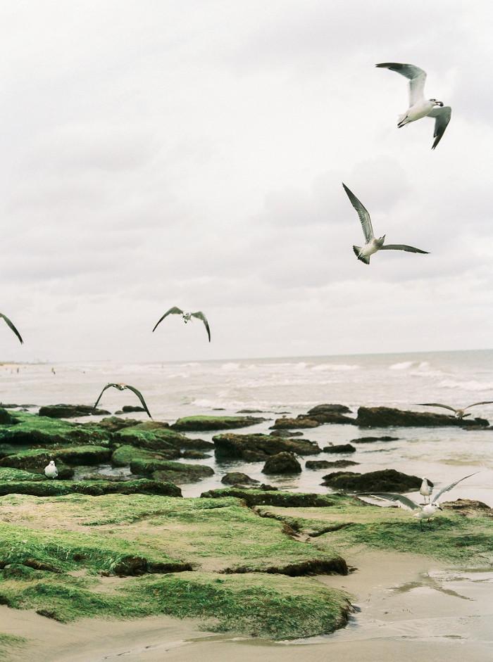 Rebecca-Rose-Perry-Vaile.Edge-of-the-Sea-2.jpg