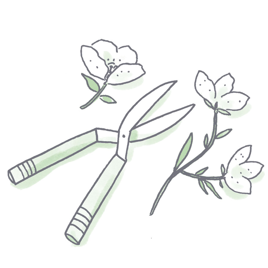 FloralClippers.jpg