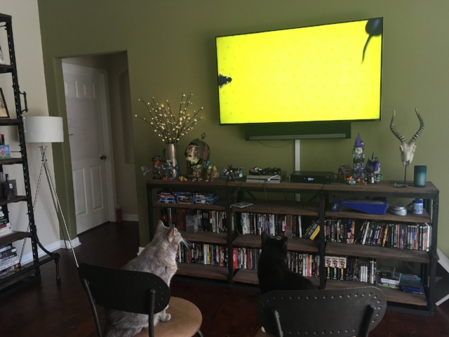 My sister's cats watching a TV show for cats