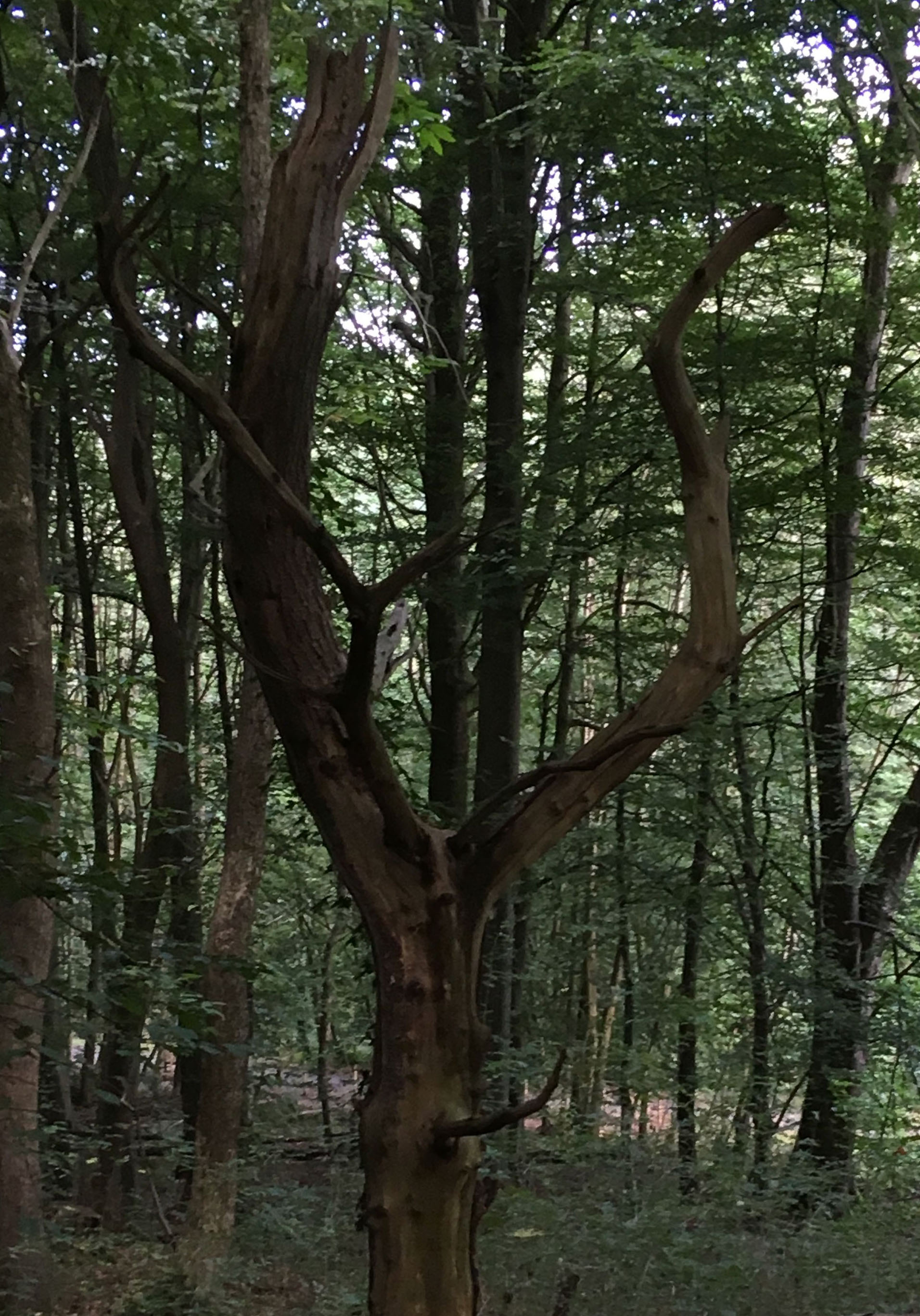 Elen of the Ways as she appeared in this tree in St Fagans National Museum.