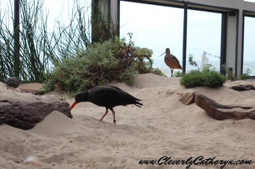 Sandy Shore & Aviary