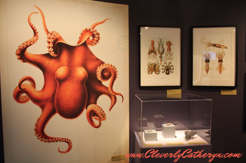 Tentacles Exhibit
