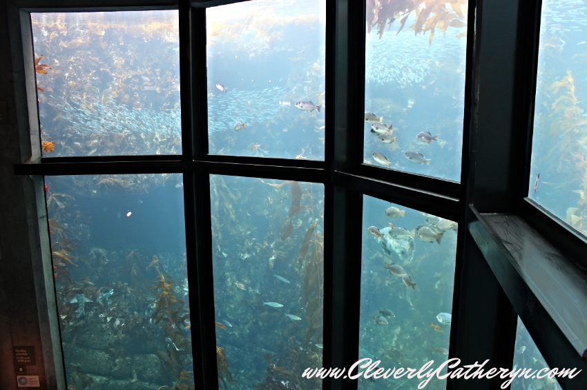 Kelp Forest Tank-28 feet tall