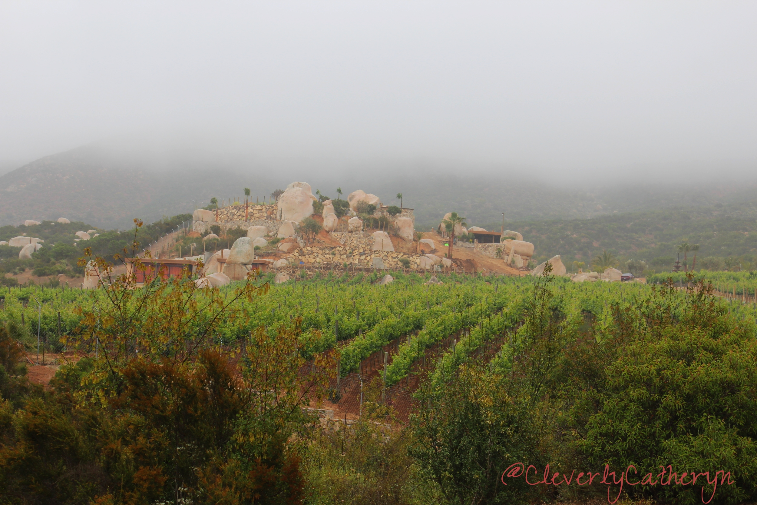 View from Tres Mujeres Winery on our overcast day.