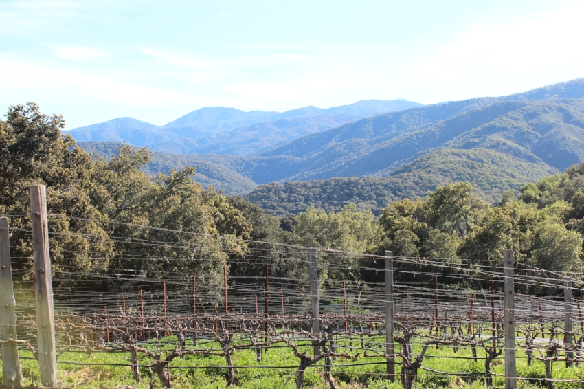 Holman Ranch Vines in Carmel Valley