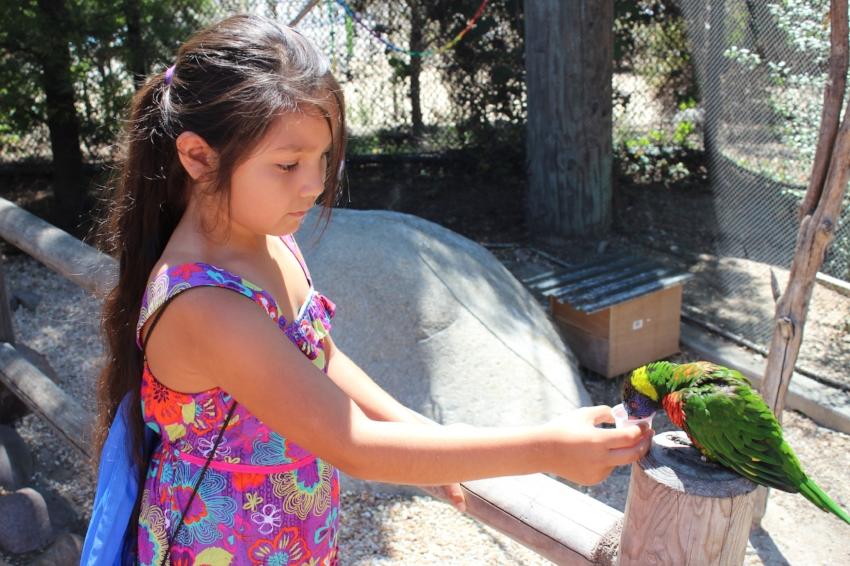 Feeding her new little friend in the Lorikeet Forest