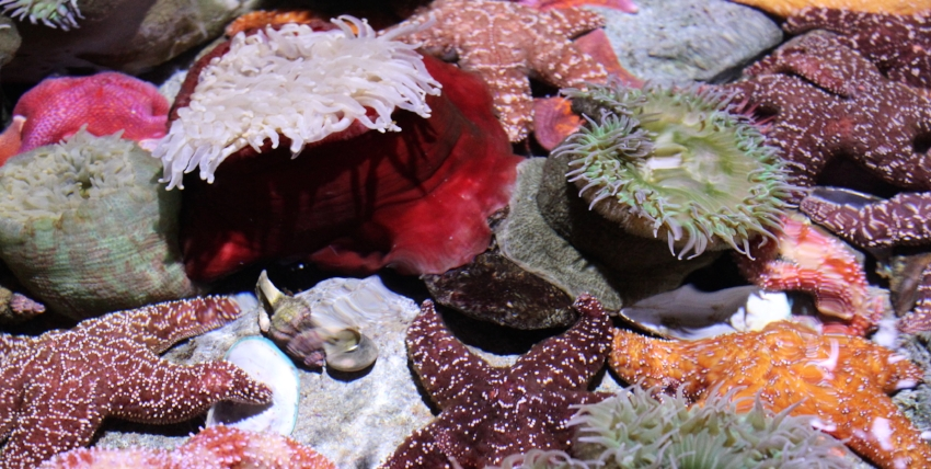 Touch tank inside the aquarium.