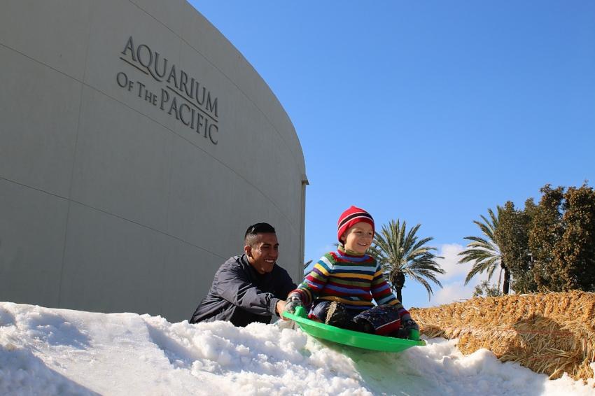 Photo Credit: Aquarium of the Pacific