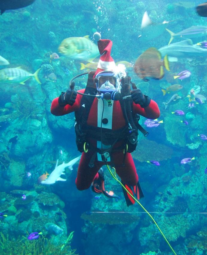 Santa Diver Photo Credit: Aquarium of the Pacific