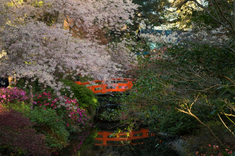 Japanese Garden © Photo Credit: Danielle Bedics-Arizala