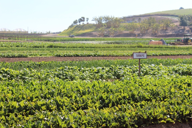 Beautiful views, fresh produce and fresh air!