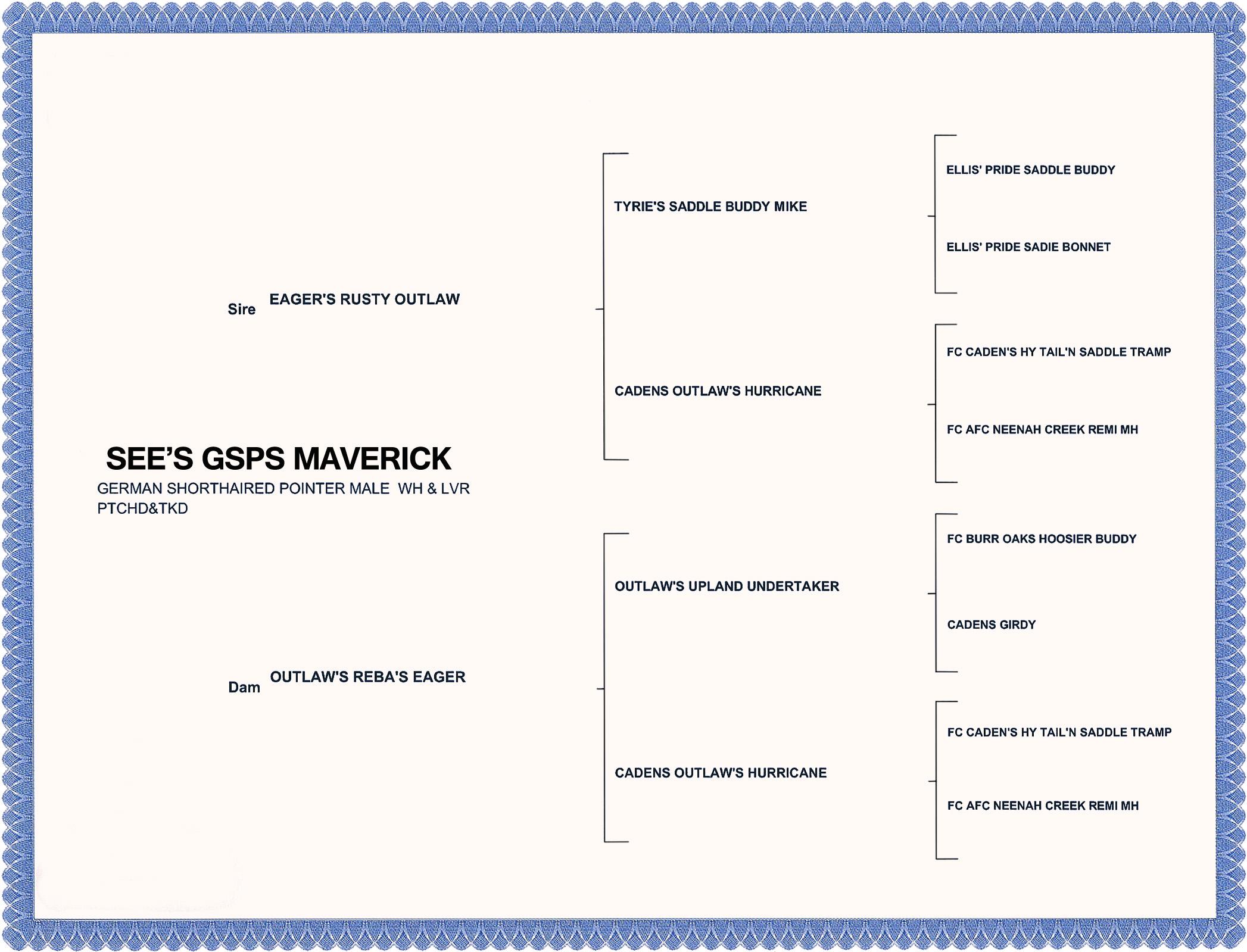 PEDIGREE MAVERICK-NO NUMBERS.jpg