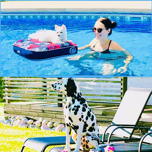 Juhannusvahdit🤗 Row in New York and Winston in Finland❤️👍🇫🇮 #dogslife#dogslifestyle #poolshark #queenofthepool #dogsmidsummer #gettingtan #dalmatien #pomeranian #dogsofinstgram