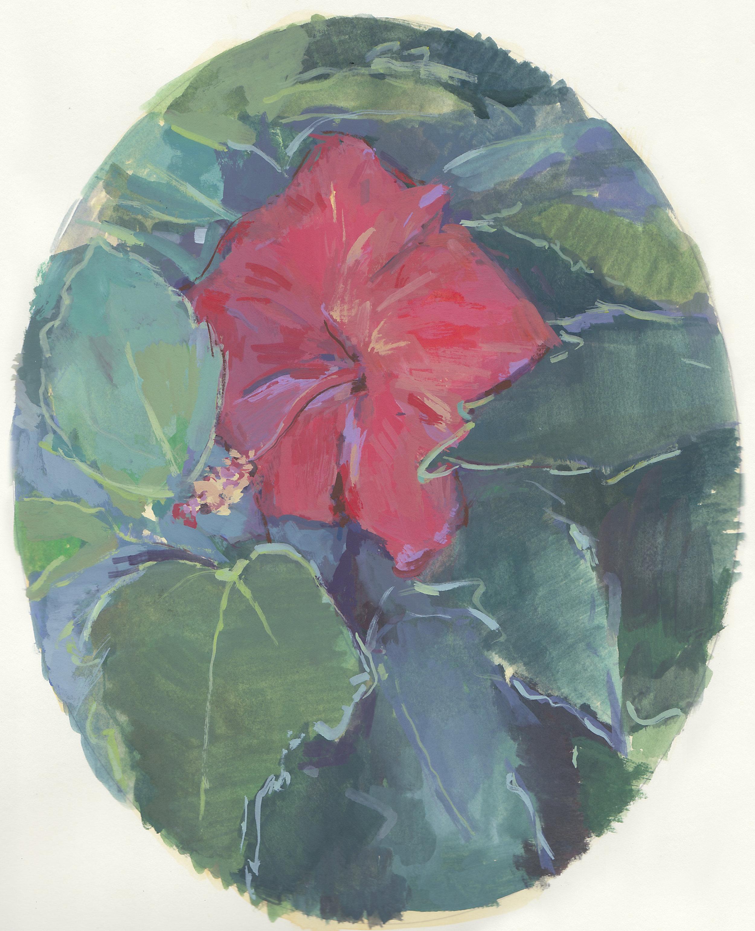 "tropical hibiscus   gouache on paper  8x10""  2017"