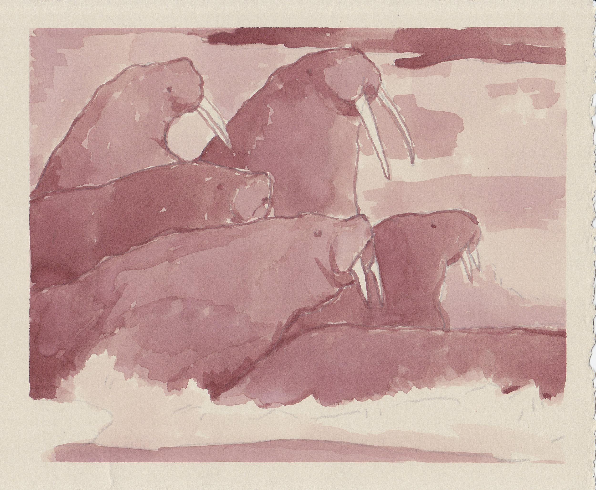 Walrus 1.jpg