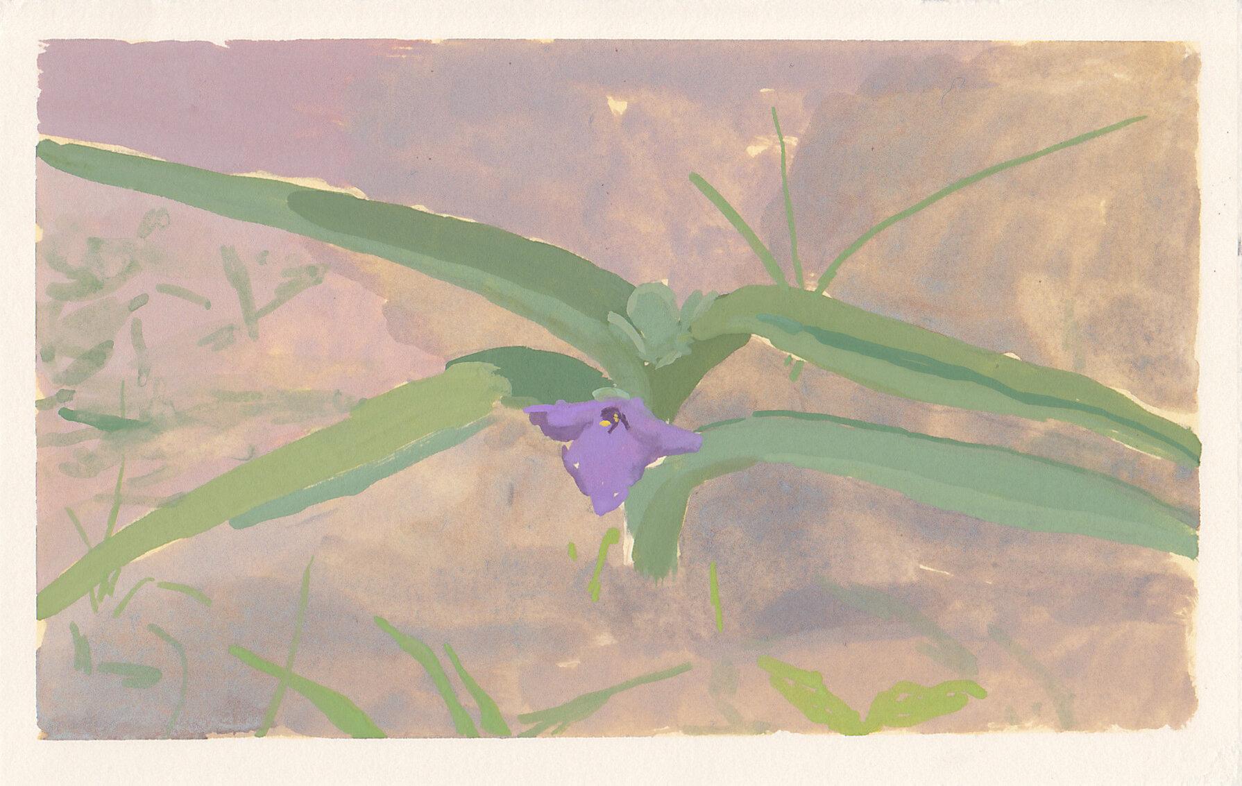 """spiderwort  gouache on paper 5.5 x 3.25"""" 2019   purchase"""