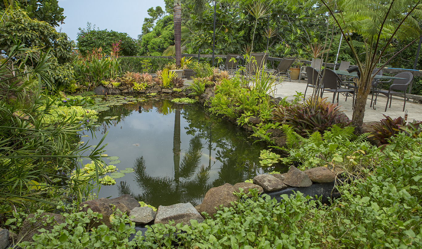 Relax, and take your lunch beside the Inn's peaceful koi pond.