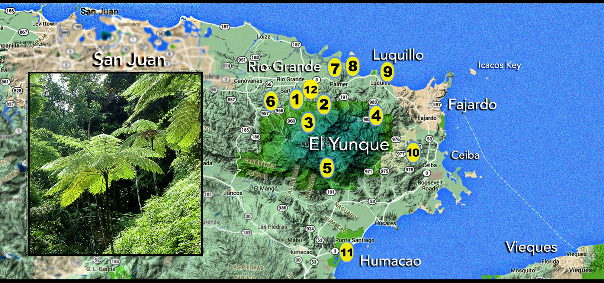 map of east end puerto rico.jpg