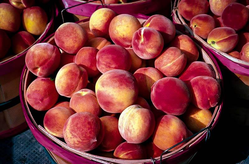Slipstone White Flesh Peach