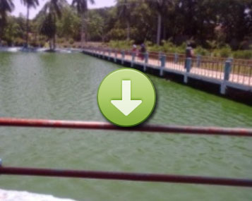 THis charming lake for entertainment was heavily contaminated by (BGA) Blue Green Algae (click image to view)