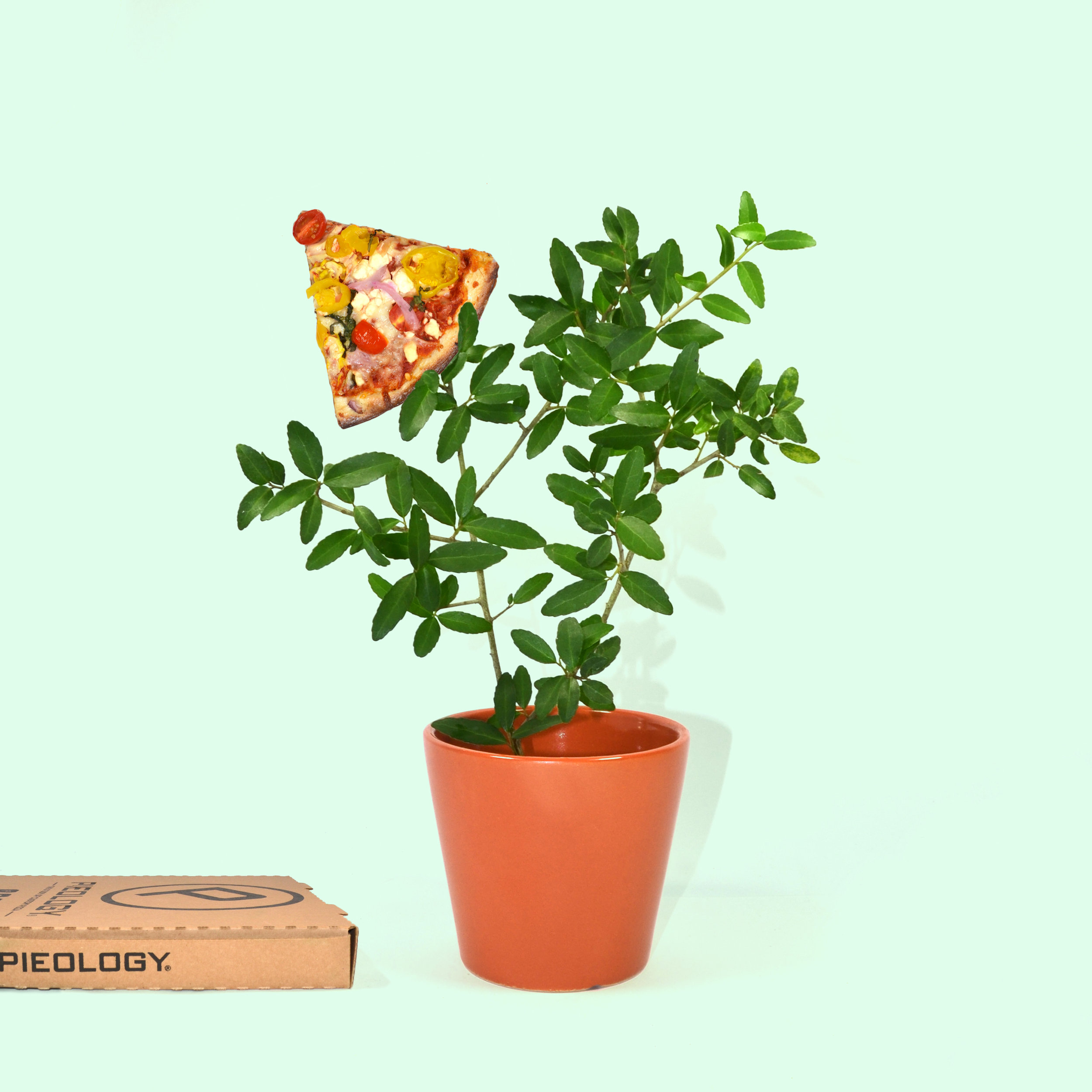 pieology-if-pizza-grew-on-trees-2.jpg