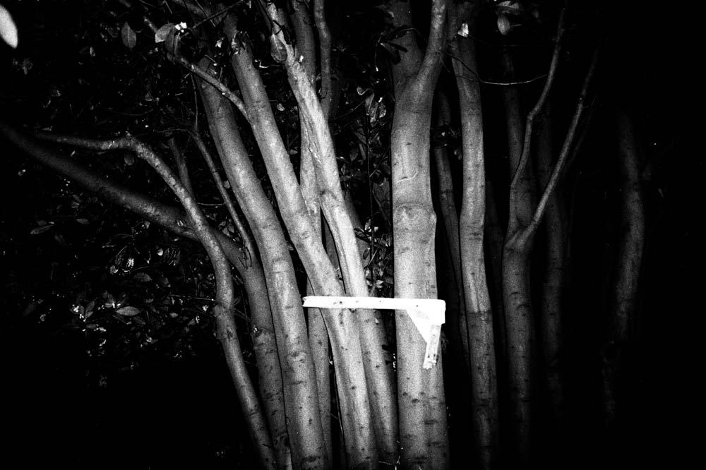 woodintree.jpg